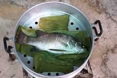 Steam sea bass fish. Steam of white sea bass fish on the banana leaf royalty free stock photo