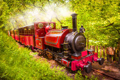 Steam train engine. Beautiful red steam train / railway engine passing through a lush green British forest stock photo