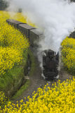 Steam train. Run through rapeseed flower field in Chengdu, China Royalty Free Stock Image
