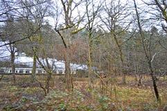 A Steam Train Viewed Through The Trees Stock Photo