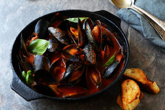 Steamed black mussels in pan Royalty Free Stock Images