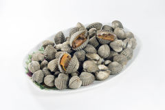 Steamed blanched clams Royalty Free Stock Photography