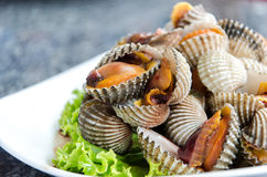 Steamed Blanched Clams Stock Photo