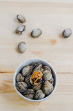 Steamed blanched clams in white bowl on wooden background Stock Photos
