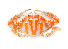 Steamed blue crab or Flower crab Royalty Free Stock Photography