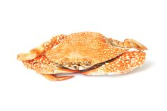 Steamed blue crab Royalty Free Stock Photos