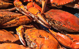 Steamed blue crabs from the Chesapeake bay. Isolated shot of steamed blue crabs from the Chesapeake bay Royalty Free Stock Photos