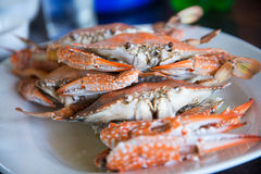 Steamed blue crabs Royalty Free Stock Photography