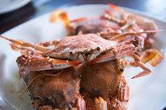 Steamed blue crabs Royalty Free Stock Photos