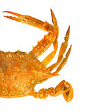 Steamed blue swimmer crab Stock Image