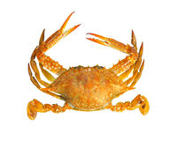 Steamed blue swimmer crab. On white background Royalty Free Stock Photo