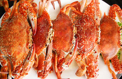 Steamed blue swimming crab. Royalty Free Stock Photos