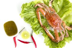 Steamed blue swimming crab, Flower crab, Blue crab Portunus pelagicus and spicy sauce isolated on white background. Thai style food royalty free stock image