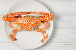 Steamed Blue swimming crab Stock Images