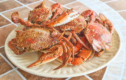 Steamed, boiled Crabs Stock Image