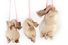 Steamed chickens Stock Images