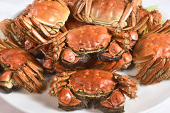 Steamed Chinese hairy crabs. On plate Stock Photos