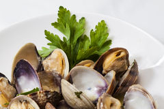 Steamed clams. In white wine sauce, with onions and parsley Stock Images