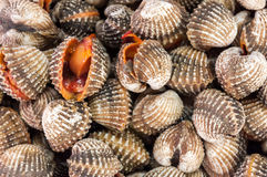 Steamed cockles. Stock Photos