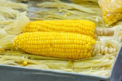 Steamed corn Stock Image