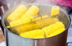 Steamed corn with a wooden plug in a cooking saucepan royalty free stock images