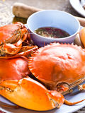 Steamed Crab Stock Images