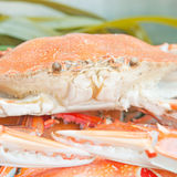 Steamed crab Stock Image