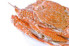 Steamed  crab on dish Stock Image
