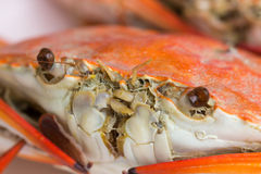 Steamed crab on dish Royalty Free Stock Photos