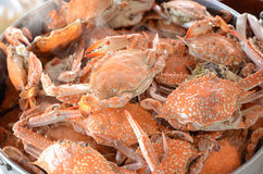 Steamed crab Stock Photo