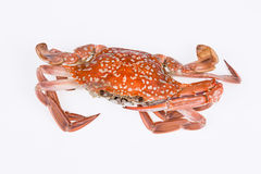 Steamed crab Royalty Free Stock Image