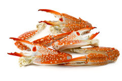Steamed Crab Leg Royalty Free Stock Photos
