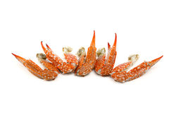 Steamed Crab Leg Royalty Free Stock Image