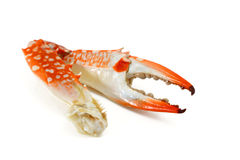 Steamed Crab Leg Royalty Free Stock Photography