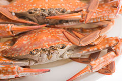 Steamed crab for seafood. Hot steamed crab asia cuisine Stock Images