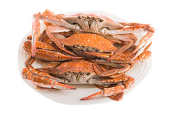 Steamed crab for seafood. Hot steamed crab asia cuisine Royalty Free Stock Images