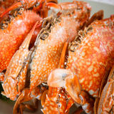 Steamed crab Royalty Free Stock Photo