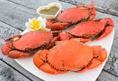 Steamed crab. With  spicy sauce Royalty Free Stock Images