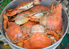 Steamed crab in steaming pot Royalty Free Stock Image