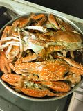 Steamed crab in steaming pot. royalty free stock image