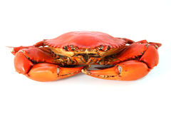 Steamed Crab. On white background Royalty Free Stock Photo