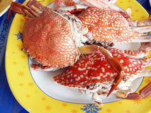 Steamed crabs Stock Image