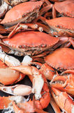 Steamed crabs asia cuisine Stock Photography