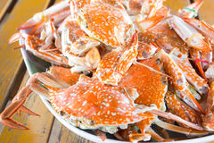Steamed Crabs Royalty Free Stock Photo
