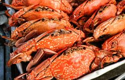 Steamed crabs in a fish market Royalty Free Stock Image
