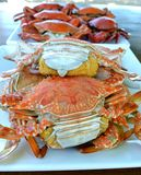 Steamed crabs food. On the vacation Royalty Free Stock Image