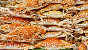 Steamed crabs. For meal time Stock Photography