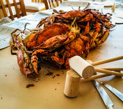 Steamed Crabs. Steam crabs on a paper covered table with mallott royalty free stock photos