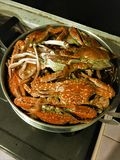 Steamed crabs in steaming pot.Steamed crabs in steaming pot. Steamed crabs in steaming pot stock photography