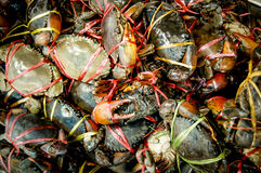 Steamed crabs. In Thailand, Thailand Seafood stalls Royalty Free Stock Images